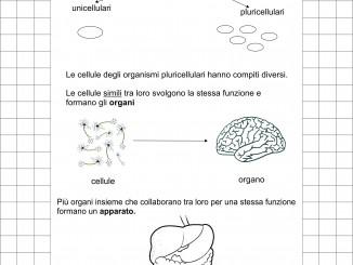dalla-cellula-allorganismo