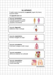 Classe Quinta Scienze Dalla Cellula Allorganismo I Tessuti Gli