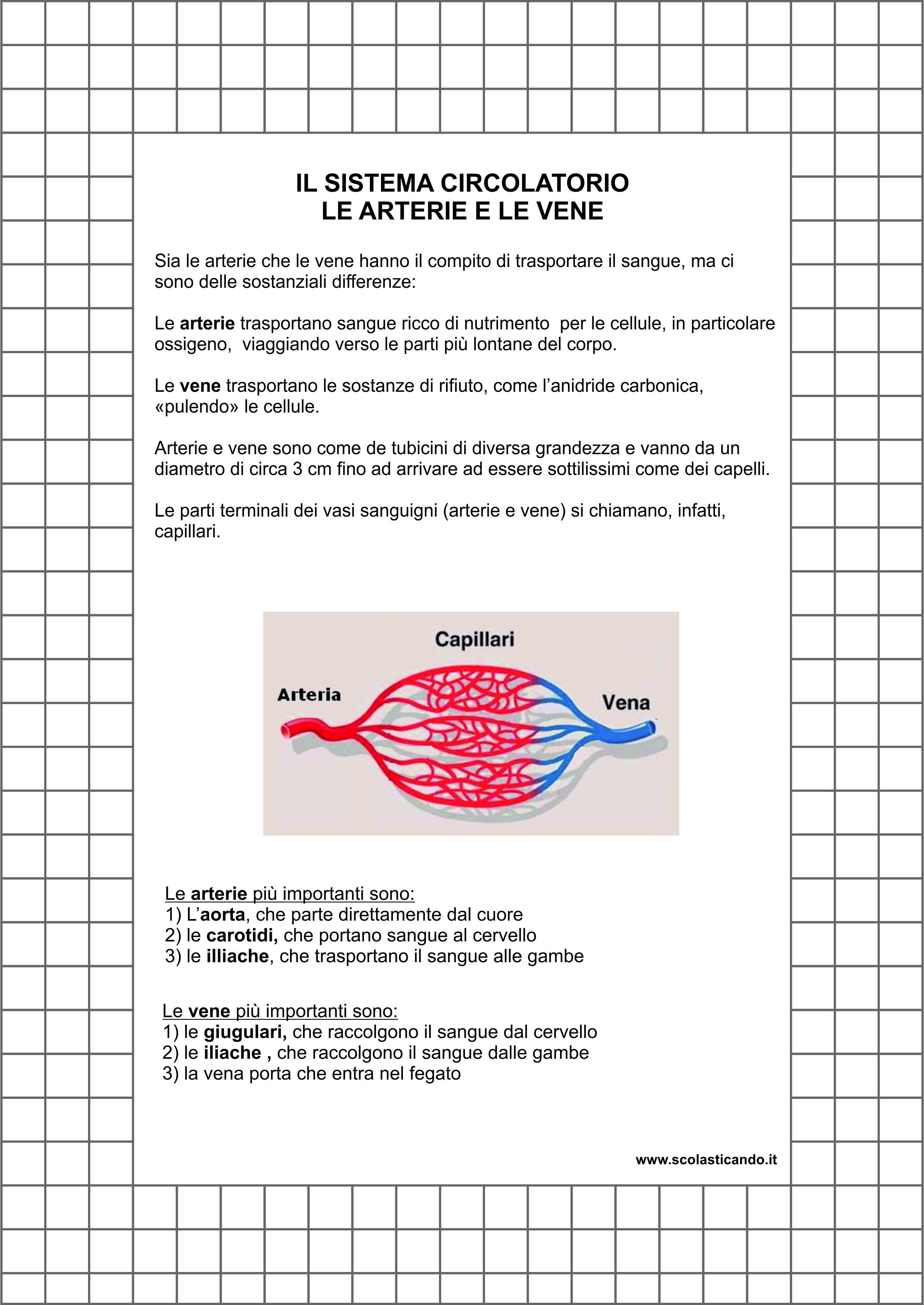 Eccezionale Classe quinta, scienze: le arterie e le vene, scheda e verifica da  DT28