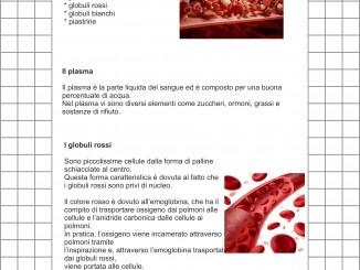 il sangue1