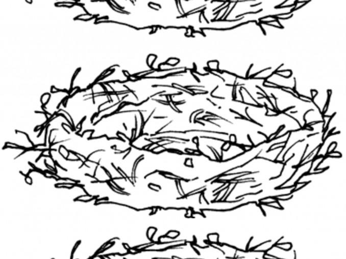 divisione nido